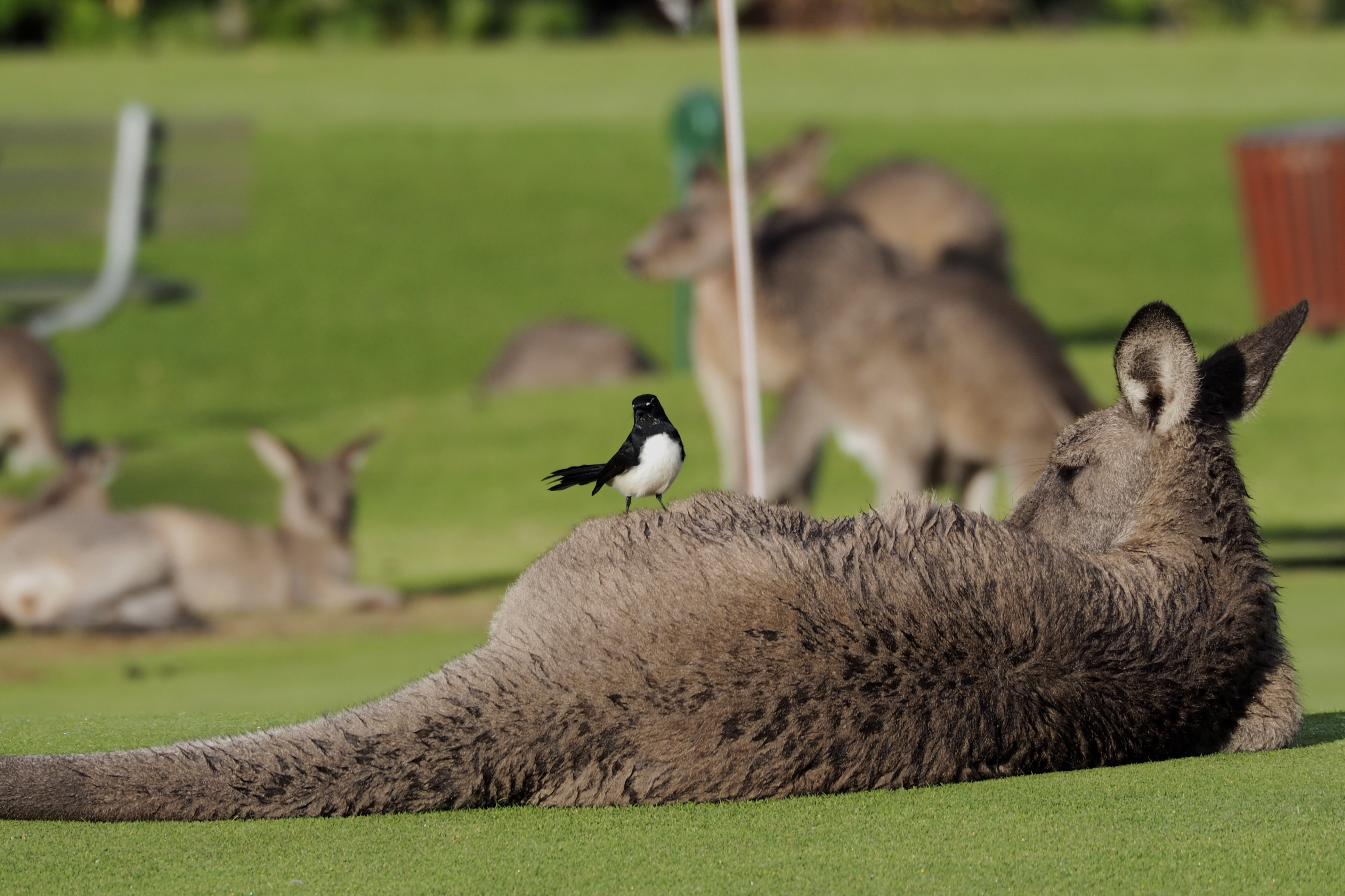 Locals on the 18th hole