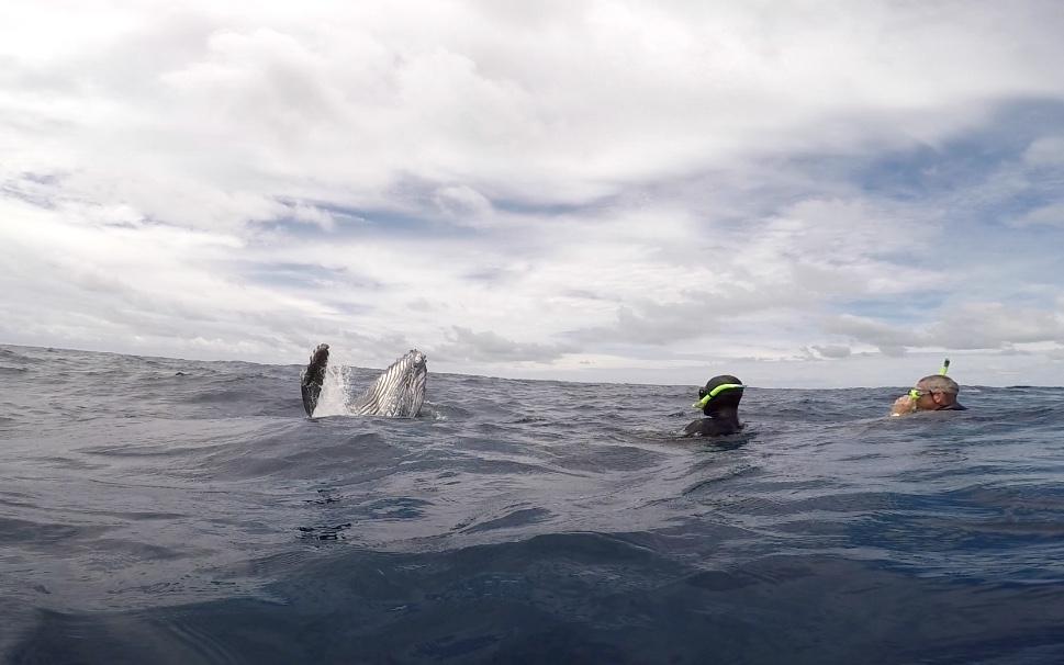 Diving with Humpbacks