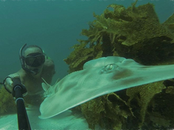 Selfie with a Shovel Nose Shark/Ray