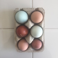 Æg.jpg