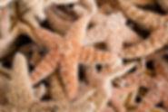 starfish-686710_1920.jpg
