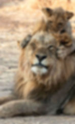 2019-05-fathers-day-lion.jpg