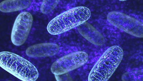 Mitochondria Functions For Healthy Aging: What does the Mitochondria do?