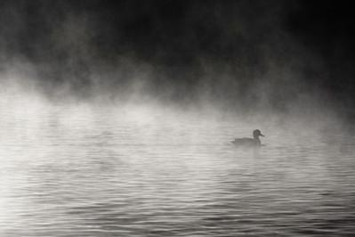 Still in the Mist