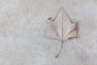 Leaf and Concrete