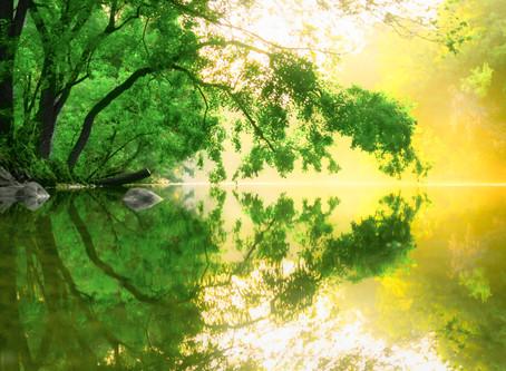 Enriching Life by Stretching Perception
