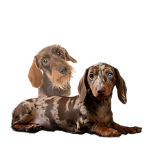 doxies no back.png