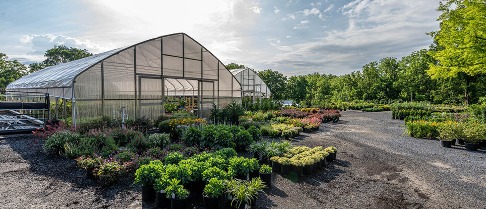 Flowers, plants, trees, shrubs, mulch, stone and more!