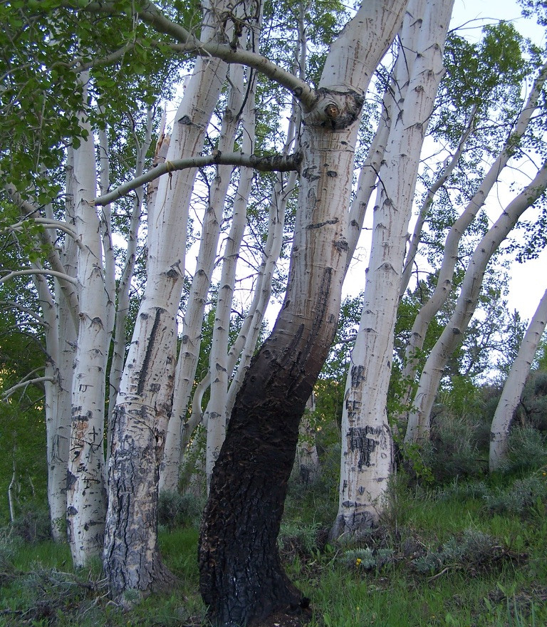 Aspen Grove, Ike's Canyon