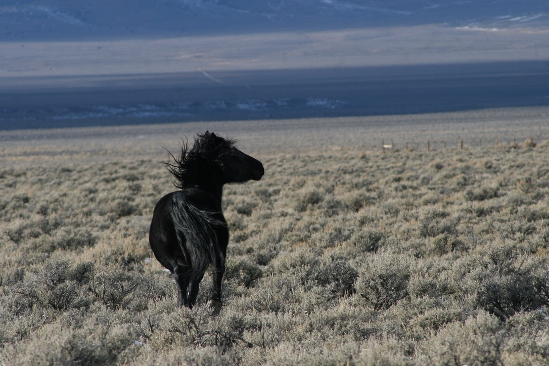 Black Mustang No. 2