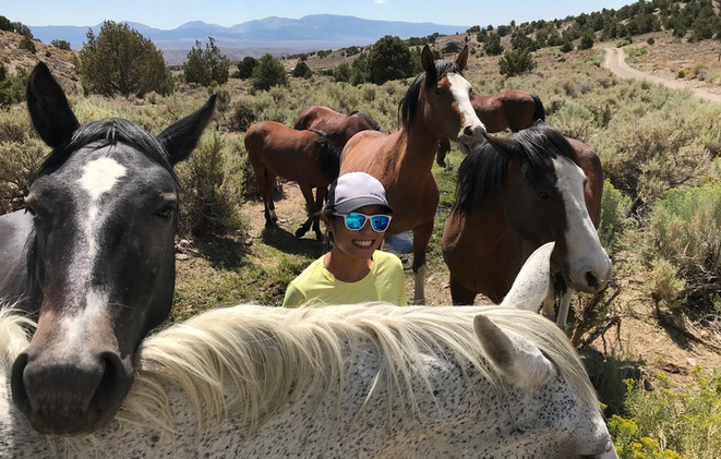 Communing with Horses