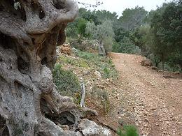 Finca Son Mas, Senderismo eventos naturaleza Mallorca