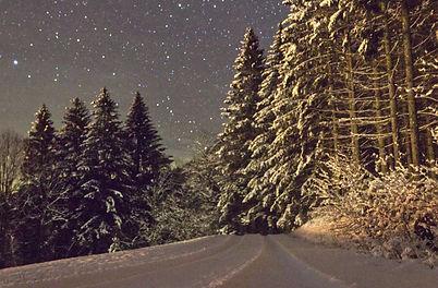 Winterwald.jpg