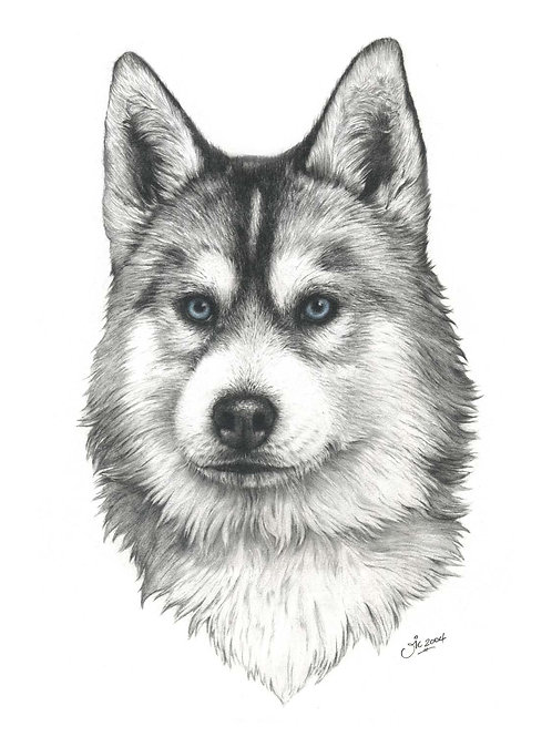 'GREY' OPEN EDITION HUSKY PRINT