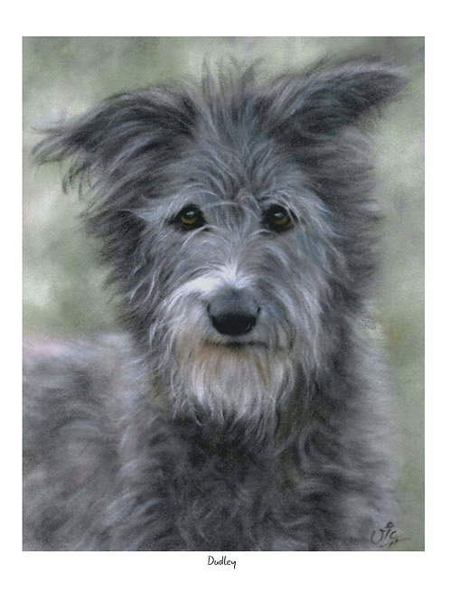 Dudley - Open Edition Lurcher Print