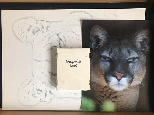 Mountain Lion in Pastel Box Set