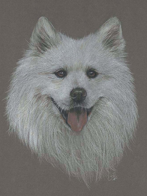 Samoyed Original drawing