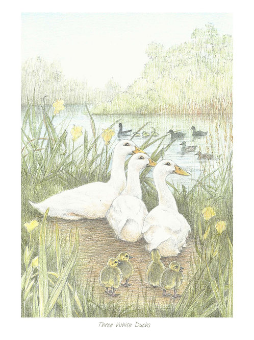 'Three White Ducks' Open Edition Print