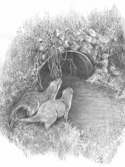 'A Tale of Two Otters' Original Drawing