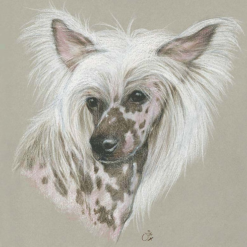 Chinese Crested Original drawing