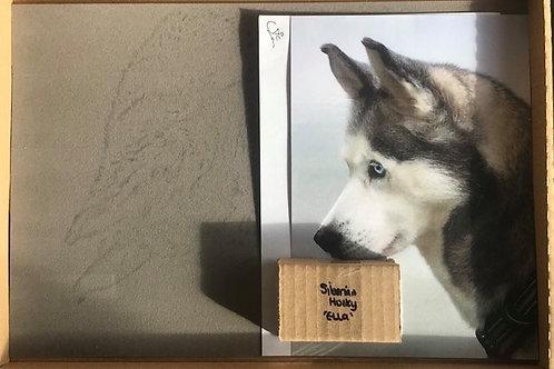 'Ella' Siberian Husky in Pastel Workshop Box Set