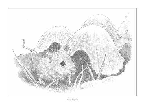 'Ambrosia' Open Edition Print