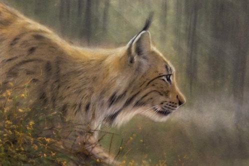 Lynx Zoom Workshop