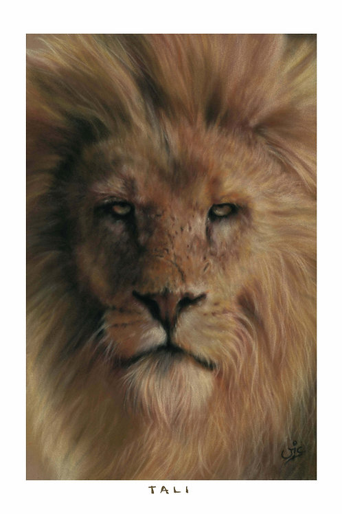 'TALI' OPEN EDITION LION PRINT