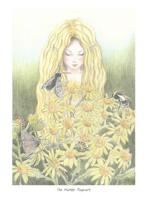 'The Humble Ragwort' Open Edition Print