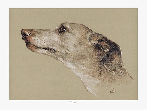 Whippet - Open Edition Hound Print