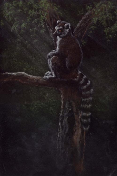 Lemur Original Pastel Painting