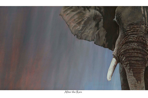 'AFTER THE RAIN' LIMITED EDITION ELEPHANT PRINT