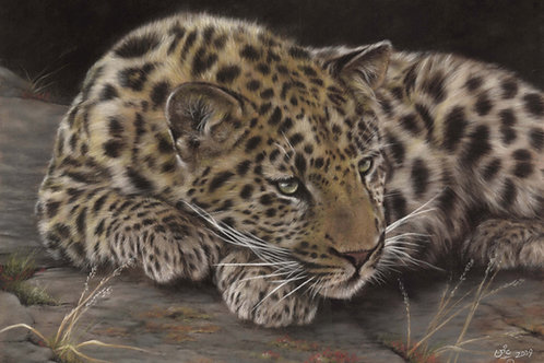 Hanging Out - Original Amur Leopard in Pastel