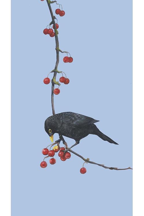 'Cherry Picking' Open Edition Blackbird Print