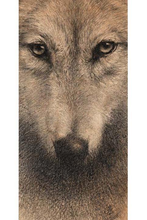 'AMAROQ' OPEN EDITION WOLF PRINT