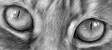 Feline Eye.jpg