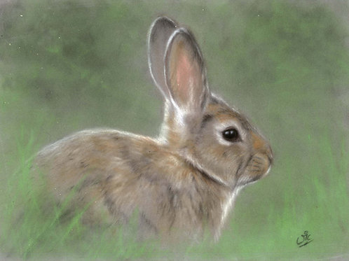 Rabbit Original Pastel on Velour