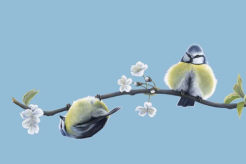 BIRD GREETING CARDS - GIFT SET OF 4