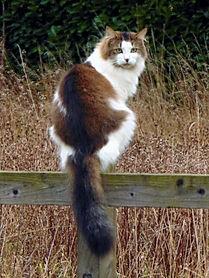 Cat Ref.jpg