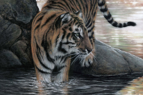 Distracted - Original Tiger in Pastel