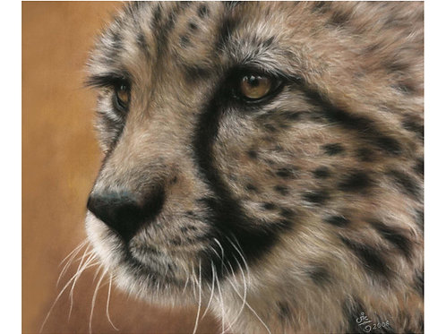 'MEPHISTO' LIMITED EDITION CHEETAH PRINT