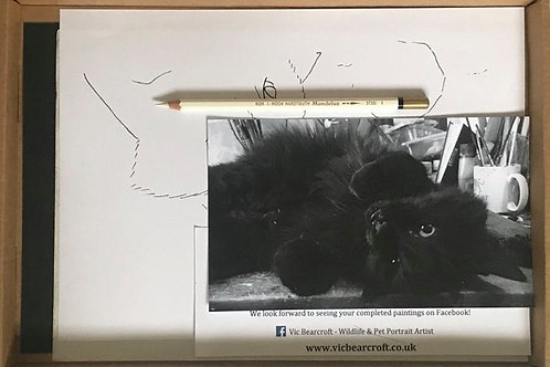 Drawing a Black Cat in White Pencil Workshop Box Set
