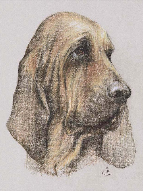 Bloodhound Original drawing