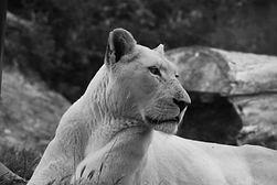 Big Cat ref 1.jpg