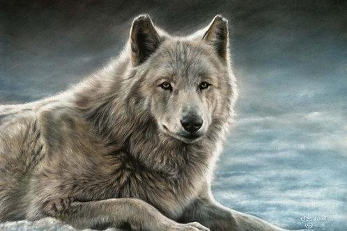 Denali - Original Wolf in Pastel