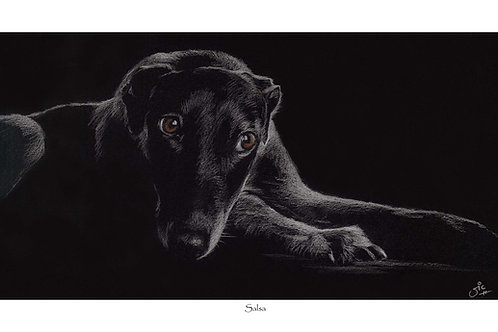 Salsa - Open Edition Lurcher Print