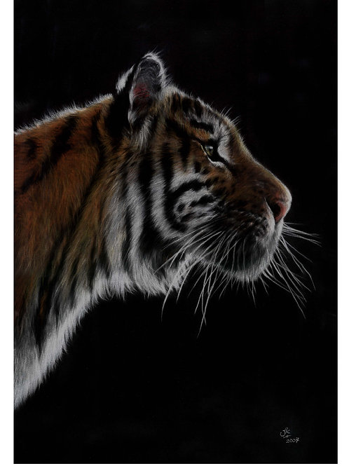 'BURNING BRIGHT' LIMITED EDITION TIGER PRINT