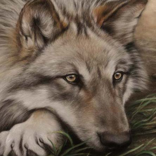 'INTRIGUE' LIMITED EDITION WOLF PRINT