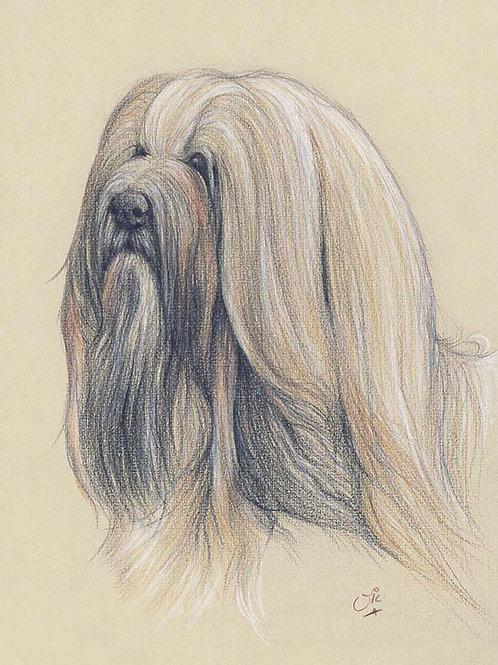 Lhaso Apso Original drawing