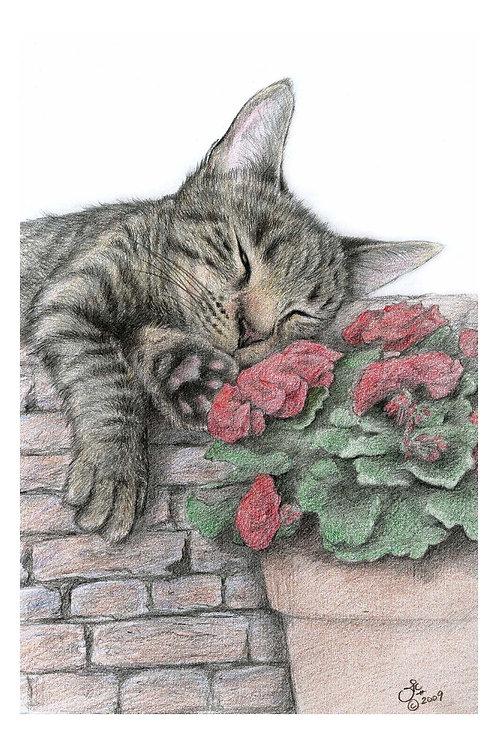 'WALLFLOWER' OPEN EDITION TABBY CAT PRINT